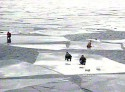 На Запорожье рыбаков унесло на льдине!