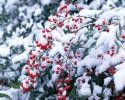 Когда в этом году выпадет первый снег?