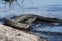 Осторожно: в жилых домах запорожцев появились змеи!