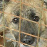 Началась «охота» на бездомных собак