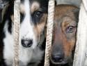 Украина обещает больше не убивать собак