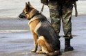 В Запорожье введут налог на домашних животных