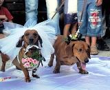 В Запорожье сыграли собачью свадьбу