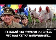 Владимир Рогов в рубрике ЗаНоЗа - Свиньи не должны быть у власти - ВИДЕО